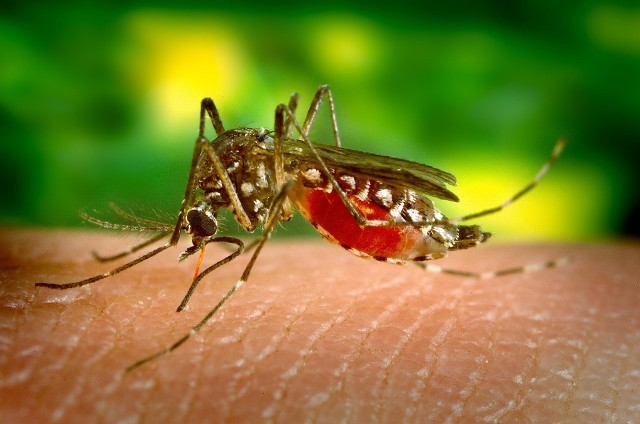 Upały, ulewne deszcze i burze to idealne środowisko do wylęgania się komarów. Duża liczba tych insektów sprawia, że wypoczynek w ogrodzie jest niemożliwy, a sen zamienia się w istny koszmar.