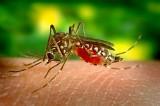 Jak pozbyć się komarów z domu. Skuteczne sposoby na walkę z tymi krwiopijcami!