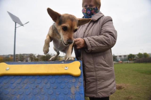 Wybiegi dla psów w różnych miastach Polski