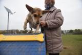 Myślenice. Powstała petycja w sprawie stworzenia wybiegu dla psów