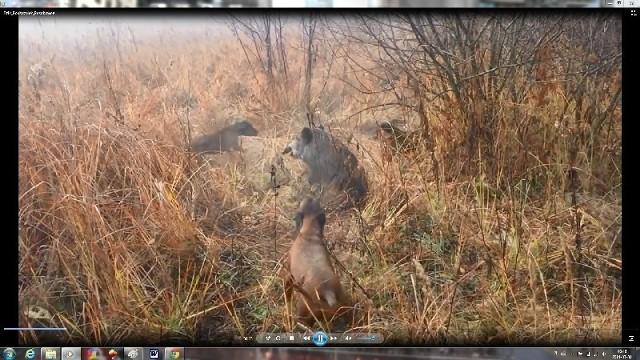 Zrzut z ekranu jednego z ujęć drastycznego filmu zamieszczonego w Internecie.