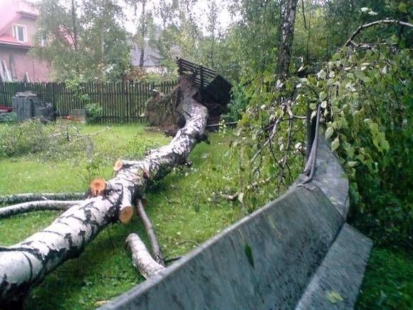 wyrywała drzewa i zrywała dachy w naszym województwie już nie raz. Na zdjęciu powalone drzewo w Księżynie.