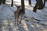 Zima w Parku Kuronia w Sosnowcu. To piękne miejsca na spacer, również w zimie