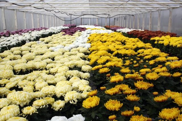Ceny żywych kwiatów zaczynają się już od 10 złotych
