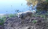 Leśniczy uratował porzuconego w lesie psa