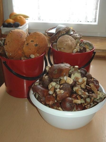 Tegoroczny sezon grzybowy jest wyjątkowo urodzajny. Więcej grzybów oznacza również większą możliwość zatrucia. Sprawdzajmy atesty.