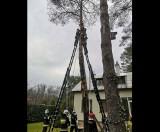 Wypadek podczas prac w ogrodzie. Mężczyzna przycinał gałęzie i... zawisł głową w dół! ZDJĘCIA