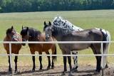 Stadnina koni w Michałowie zaprasza w środę, 15 sierpnia na dzień otwarty. Będzie dużo atrakcji