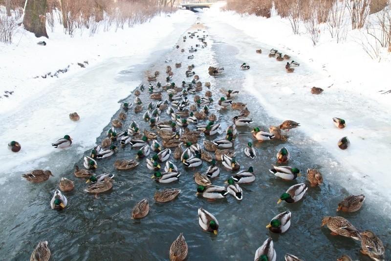 Zima w Białymstoku (zdjęcia)