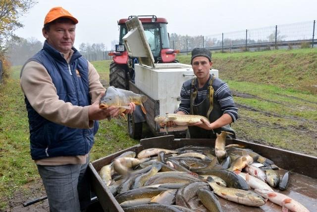 - Polecam kupno ryby żywej, wtedy możemy ocenić jej świeżość. Im bardziej żwawo się porusza, tym lepiej - radzi Grzegorz Wójcicki, właściciel stawów rybackich koło Buska - Zdroju.