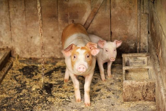 22 lipca pojawiło się ogłoszenie ministra rolnictwa w sprawie wsparcia na bioasekurację