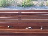 Ptaki jeden za drugim uderzały o szyby przystanku i umierały. Urząd miejski w Nowej Soli zareagował natychmiast