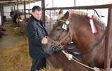 Piękne konie zimnokrwiste były w Szepietowie - bez publiczności (Zdjęcia)