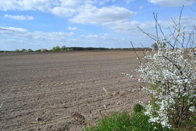 Rolnicy chętnie dzierżawią ziemię, ale niektórzy woleliby ją kupić