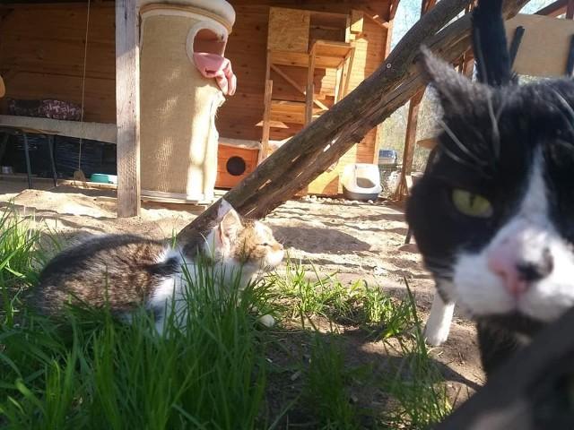 Kocie Ranczo w Czarnej Białostockiej prowadzą Barbara i Radek Buczyński. Małżeństwo przygarnia bezdomne, schorowane i niechciane kotki i szuka im nowego domu. Jeśli nikt się nimi nie zainteresuje, koty zostają na ranczu.