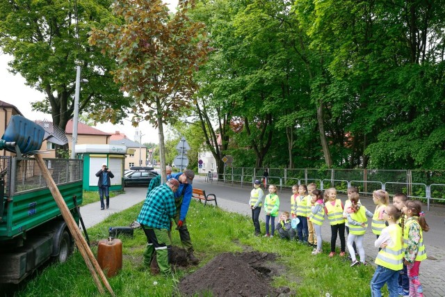 """Katowice: posadzą ponad 300 nowych drzew z aplikacji """"wCOP drzewo""""Zobacz kolejne zdjęcia. Przesuwaj zdjęcia w prawo - naciśnij strzałkę lub przycisk NASTĘPNE"""
