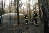Pożar w Nadleśnictwie Włodawa. Spłonęły 33 hektary lasu. Zobacz zdjęcia
