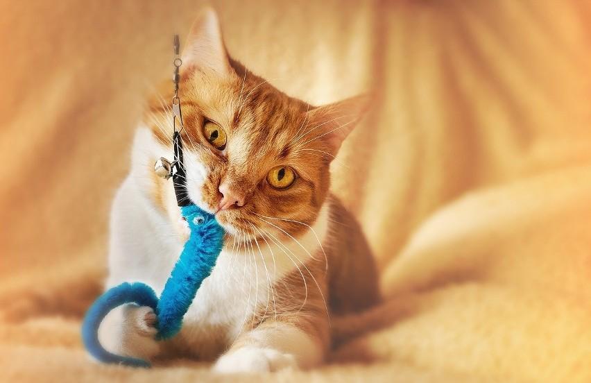Chcielibyście sprawić swojemu kotu ciekawy prezent, z...