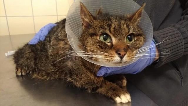 Kot Szczepan jest już po operacji, ale nadal potrzebuje pomocy.