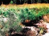 Puszcze Podlasia: Od nasionka, przez sadzonkę, do drzewa