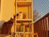 Montaż siatki na balkonie, aby... nie wypadł kot. Dobry biznes w epidemii. W Łodzi jest taniej niż w Warszawie? Co na to spółdzielnie i sąd?
