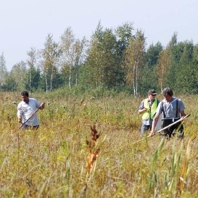 Łąki na Bagnie Ławki w BPN to arena kosiarskich mistrzostw. Dawniej były wykorzystywane przez rolników, ci jednak porzucili je.