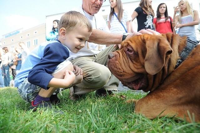 Po raz ostatni posiadacze psów w Opolu płacili podatek w 2007 r. Powrotu do tego raczej nie będzie.