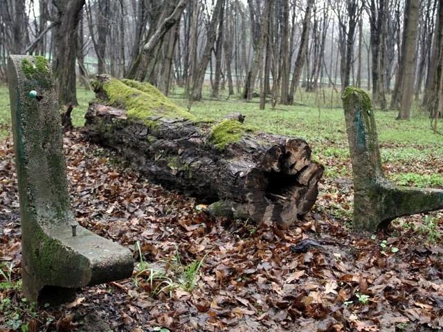 Las Zwierzyniecki obecnie nie jest w najlepszym stanie