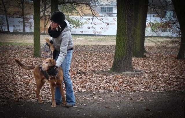 W Wąbrzeźnie osoby objęte kwarantanną o wyprowadzenie psa mogą prosić urzędników lub wolontariuszy