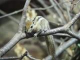 Kolejni nowi mieszkańcy łódzkiego Zoo: kanguroszczury, chińskie przepiórki i wiewiórki. ZDJĘCIA