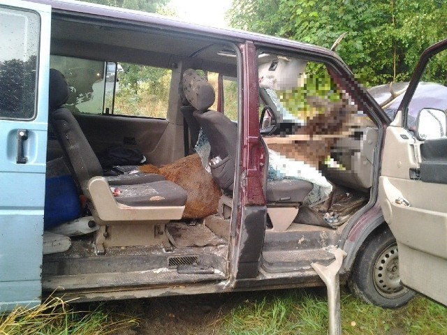 Auto zderzyło się z jeleniem. Zwierzę wpadło do  kabiny