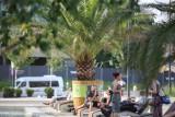 Palmy na rynku w Katowicach znikają z centrum Katowic. Zimę spędzą w Panewnikach