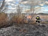 Gmina Koronowo. Pożar trzcinowiska oraz łodzi. Strażacy w akcji [zdjęcia]