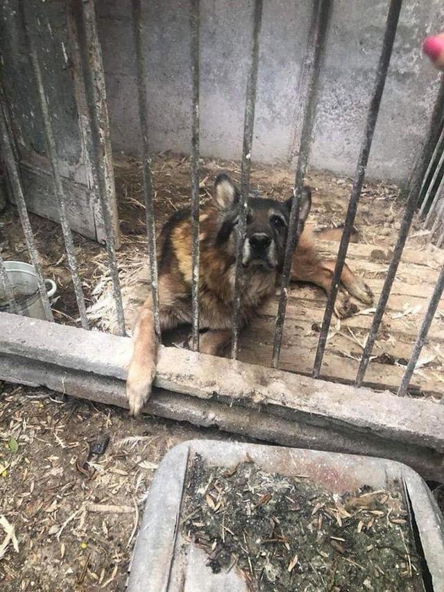 Inspektorzy TOZ-u relacjonują, że psy pozamykane były w pospawanych klatkach, a aby wyprowadzić je na spacer, trzeba było przerzucać je przez kojce. Natomiast w klatkach zalegał kilkucentymetrowy, śmierdzący z daleka obornik, prawdopodobnie nigdy nie sprzątany.