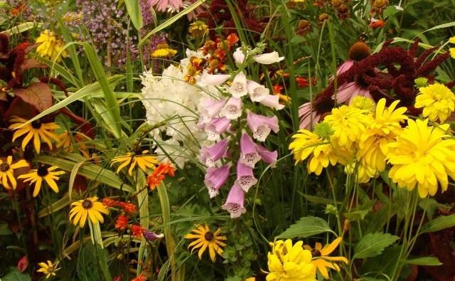 Nawet w pozornie niesprzyjających warunkach można stworzyć kwitnącą rabatę. Wystarczy wybrać odpowiednie rośliny.