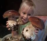 Gigantyczny wysyp grzybów w lasach pod Radomiem! Zobacz zdjęcia z grzybobrania Czytelników