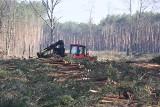Koniec wycinki pod południową obwodnicę Zielonej Góry. Niebawem rusza jej budowa. Ile drewna pozyskano?