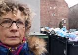Wysyp szczurów na Przedmieściu Oławskim we Wrocławiu. Mieszkanka pokazuje, że tak źle jeszcze nie było! [FILMY]