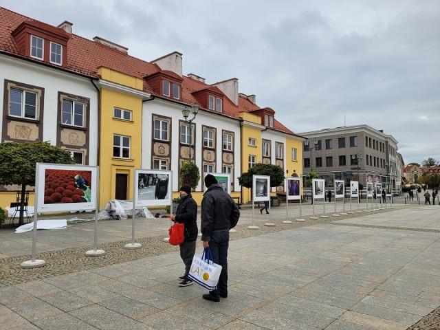 """INTERPHOTO 2021 to wielkie święto fotografii. W ramach festiwalu, na Rynku Kościuszki można oglądać wystawę """"Street Art Photo Call""""."""