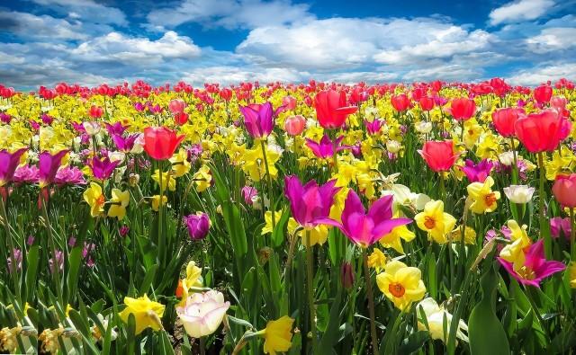 Metropolia zachęca do zakładania kwietnych łąk