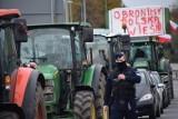 """Protest w Warszawie. """"Mamy siedzieć w domach, gdy rujnują rolnictwo?"""", pyta hodowca świń spod Żnina"""