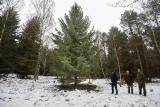 O czym w Wigilię szumią lasy, co mają do powiedzenia ich mieszkańcy?