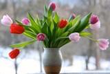 Kiedy będzie wiosna. Kiedy będzie ciepło? Prognoza pogody długoterminowa, czy to koniec zimy? [WIOSNA 2021 KIEDY] 9.03.2021