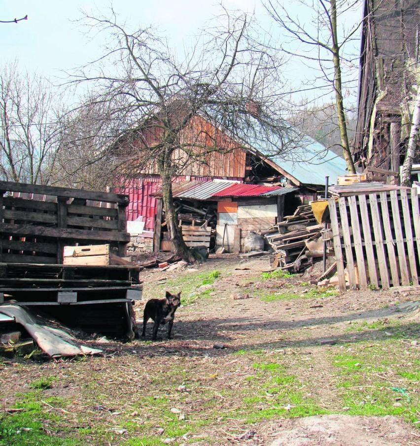 Po stertach śmieci na posesji nie ma już śladu. Zostały rudery i siedem psów, dokarmianych przez rodzinę zmarłego 67-latka.