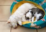 Hotele dla zwierząt na Pomorzu. Pomorskie hotele dla psów i kotów [ceny, adresy, kontakt]