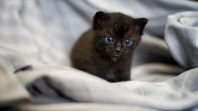 Takie cudne kociaki trafiły w ostatnim czasie do zielonogórskiego schroniska.