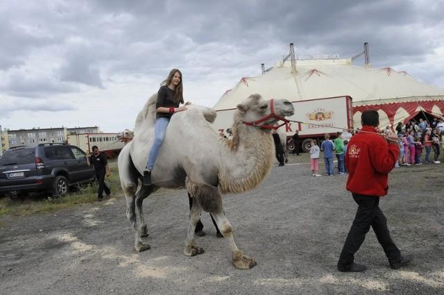 Oprócz oglądania show, można było przejechać się także na wielbłądach czy kucykach.