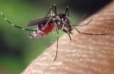 Komary nienawidzą tych zapachów. Jak odstraszyć komary? Co zrobić, żeby ustrzec się przed ukąszeniem? Oto naturalne odstraszacze
