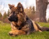 Takie psy warto adoptować - one nigdy ciebie nie zawiodą. Oto galeria najmilszych czworonogów [zdjęcia]