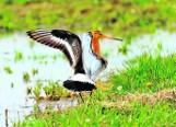 W ciągu ostatnich 200 lat w Polsce wymarło 16 gatunków ptaków.  Przetrwanie kolejnych 12 w naszym kraju wisi na przysłowiowym włosku